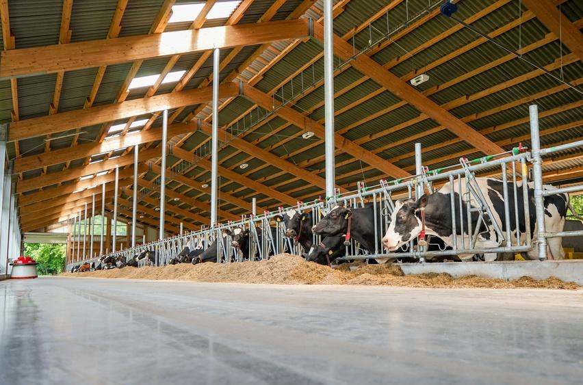 Blick auf Futtertisch eines modernen Milchviehstalles